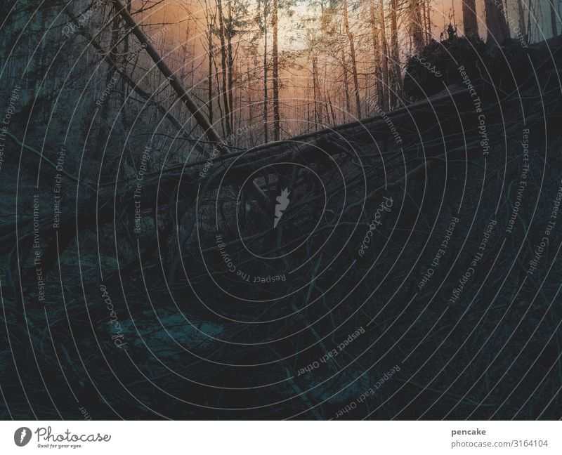 weltschmerz | düsternis und verfall Natur Landschaft Urelemente Erde Sonne Sonnenaufgang Sonnenuntergang Winter Wald Urwald Endzeitstimmung Baumstamm Schlucht