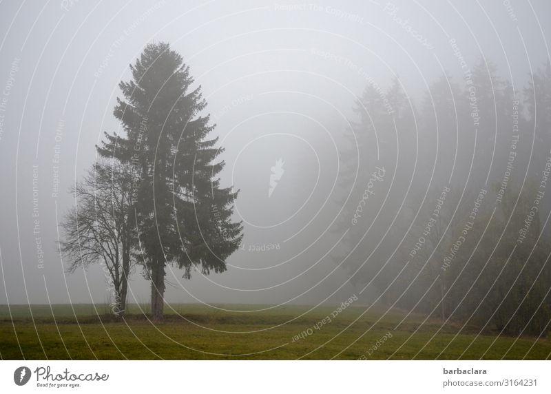 Schwarzwald im Herbstnebel Landschaft Urelemente Nebel Baum Feld Wald stehen dunkel kalt grau Gefühle Stimmung Klima Natur ruhig Umwelt Wandel & Veränderung