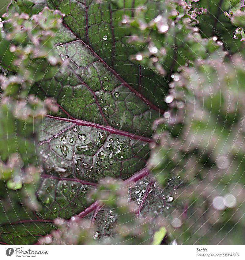 Grünkohlblatt Lebensmittel Gemüse Ernährung Bioprodukte Vegetarische Ernährung Vegane Ernährung Gesunde Ernährung Natur Sommer Pflanze Blatt Nutzpflanze Kohl