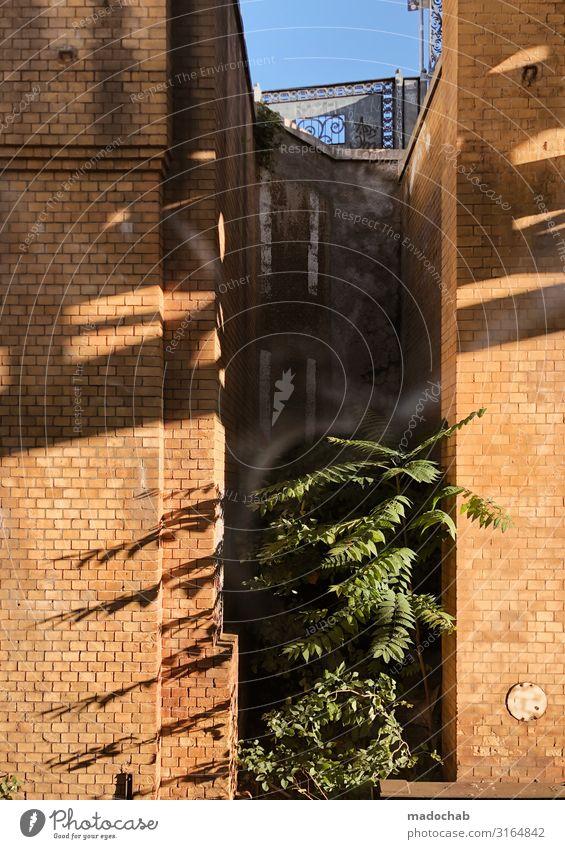 ZwischenRaum Pflanze Brücke Tunnel Tor Bauwerk Gebäude Architektur Mauer Wand Fassade Stein Beton Backstein Wachstum Tapferkeit Schutz beweglich Leben