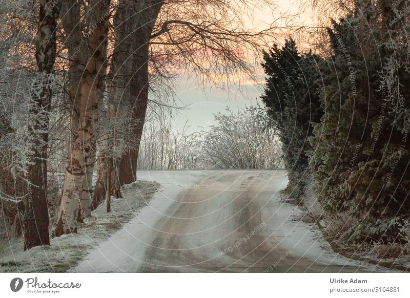 Winterlich Winterurlaub Tapete Weihnachten & Advent Natur Landschaft Sonnenaufgang Sonnenuntergang Eis Frost Schnee Blume frieren kalt ruhig Raureif