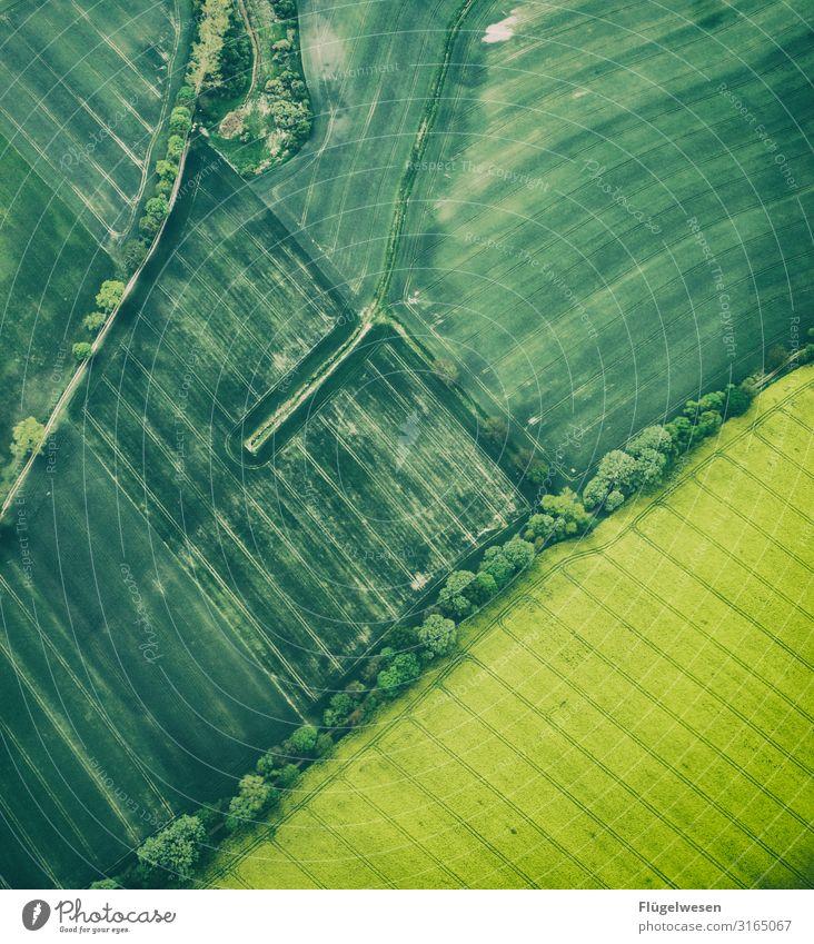 Rapsölfeld Lebensmittel Ausflug Ferne Freiheit Umwelt Natur Landschaft Klima Klimawandel Wiese Feld dehydrieren Wachstum Blühende Landschaften Grasland Rapsfeld
