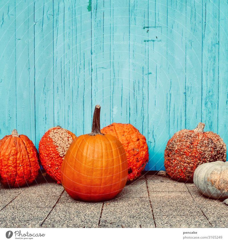 farbkombination | komplementärkontrast Kürbis orange türkis komplementärfarben Wand dekorativ Dekoration & Verzierung Halloween Herbst Erntedankfest frisch