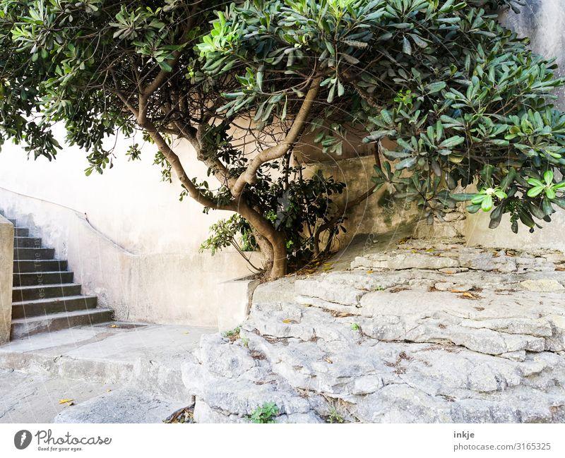 Korsischer Baum Sommer Schönes Wetter exotisch Dorf Kleinstadt Menschenleer Platz Mauer Wand Treppe Terrasse Stadt mediterran Korsika hell Farbfoto