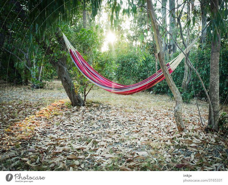 Hängematte auf Korsika Freizeit & Hobby Ferien & Urlaub & Reisen Sommer Sonne Umwelt Natur Sonnenaufgang Sonnenuntergang Sonnenlicht Schönes Wetter Baum Garten