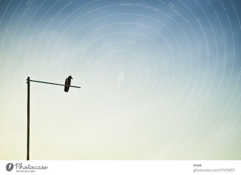 Galgenvogel Himmel Einsamkeit ruhig Winter kalt Traurigkeit Tod Vogel sitzen Zukunft leer warten einzeln beobachten Pause Trauer