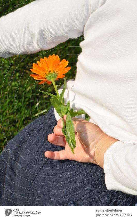 Kleinkind versteckt Ringelblume Mensch Junge Rücken Hand 1 1-3 Jahre Pflanze Schönes Wetter Blume Blüte Wildpflanze Garten Wiese Blühend entdecken frisch