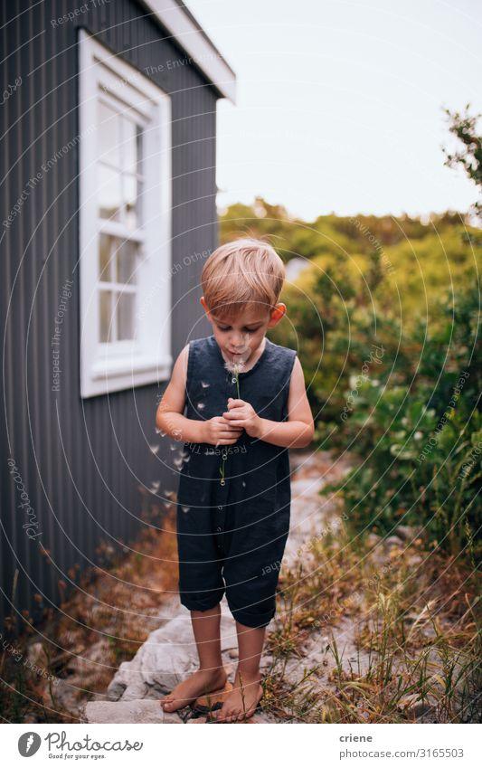 Junge vor einem Haus, der Löwenzahn bläst. Freude Glück Spielen Sommer Garten Kind Mensch Kleinkind Frau Erwachsene Familie & Verwandtschaft Kindheit Natur Gras