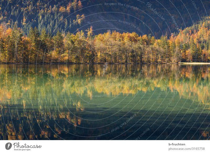 Herbstspiegelung harmonisch ruhig Ferien & Urlaub & Reisen Berge u. Gebirge wandern Natur Baum Park Wald Alpen Seeufer elegant Idylle Religion & Glaube