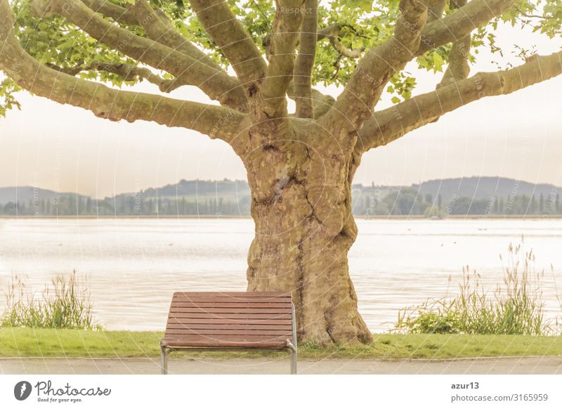Empty lonely bench near majestical old tree at lake shore Getränk Erholung Sommer Natur Park springen Kraft ruhig silence sea Victoria & Albert Waterfront bank
