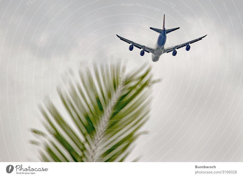 Südwärts Ferien & Urlaub & Reisen Tourismus Ferne Sommerurlaub Himmel Klima Klimawandel Pflanze Blatt Grünpflanze Palmenwedel Luftverkehr Flugzeug fliegen grün