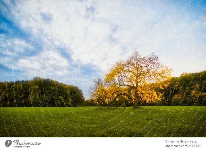 Herbststimmung Umwelt Natur Landschaft Pflanze Himmel Schönes Wetter Baum Park blau gelb grün Optimismus Kraft Geborgenheit Lebensfreude Herbstlaub herbstlich