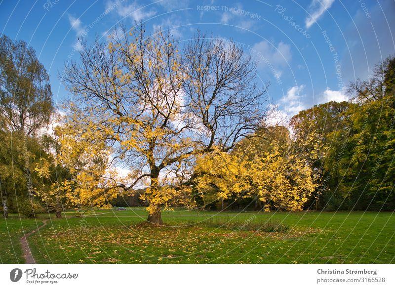 Herbstwechsel Umwelt Natur Landschaft Erde Pflanze Baum Park Beginn Zufriedenheit Herbstlaub herbstlich Herbstfärbung Herbstlandschaft Blatt Laubbaum