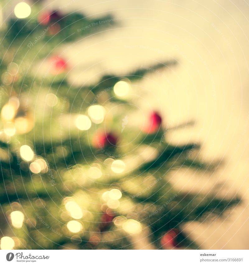 christmas tree, defocused Weihnachten & Advent Pflanze grün rot Baum Wärme Innenarchitektur Feste & Feiern Häusliches Leben Wohnung Dekoration & Verzierung Raum