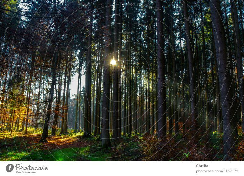 Abendlicht im Herbstwald Leben Wohlgefühl Freizeit & Hobby Jagd Tourismus Ausflug Abenteuer wandern Joggen Umwelt Natur Landschaft Pflanze Urelemente Sonne