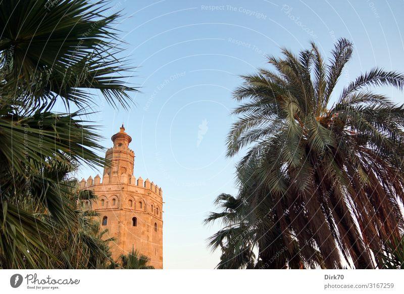Torre del Oro in Sevilla zwischen Palmen Ferien & Urlaub & Reisen Sightseeing Städtereise Sommer Architektur Schönes Wetter Pflanze Baum Park Andalusien Spanien