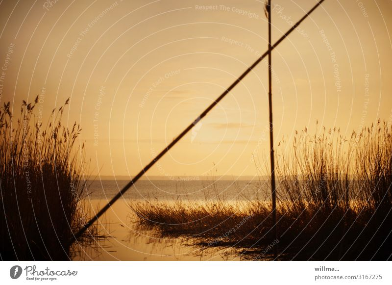 Boddenlandschaft. Bin heute völlich am Bodden. Vorpommersche Boddenlandschaft Ostsee Usedom Abenddämmerung Natur See Küste Seeufer Flussufer Stimmung Loddin
