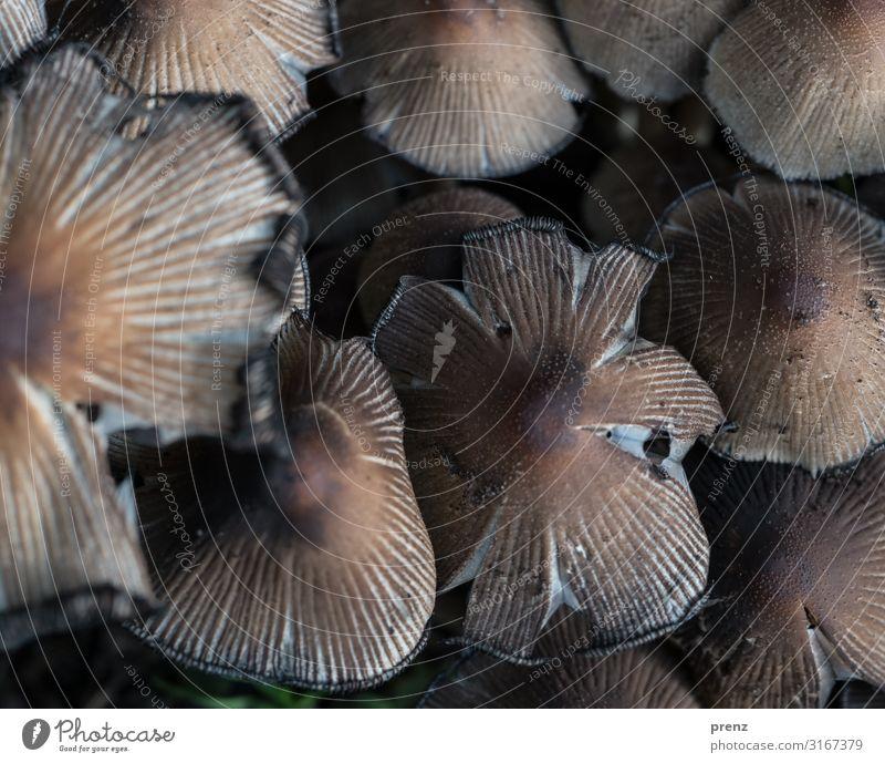 Kuschelgruppe... Umwelt Natur Herbst alt braun grau Pilz mehrere Farbfoto Außenaufnahme Menschenleer Tag Schwache Tiefenschärfe Vogelperspektive