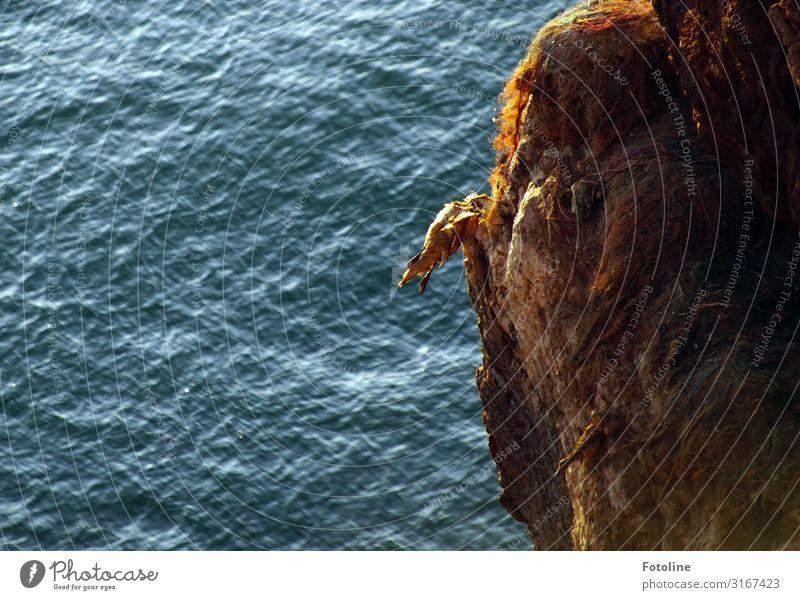 Tod am roten Felsen Umwelt Natur Urelemente Wasser Wellen Küste Nordsee Meer Tier Wildtier Vogel 1 hell nass natürlich blau braun Basstölpel Helgoland