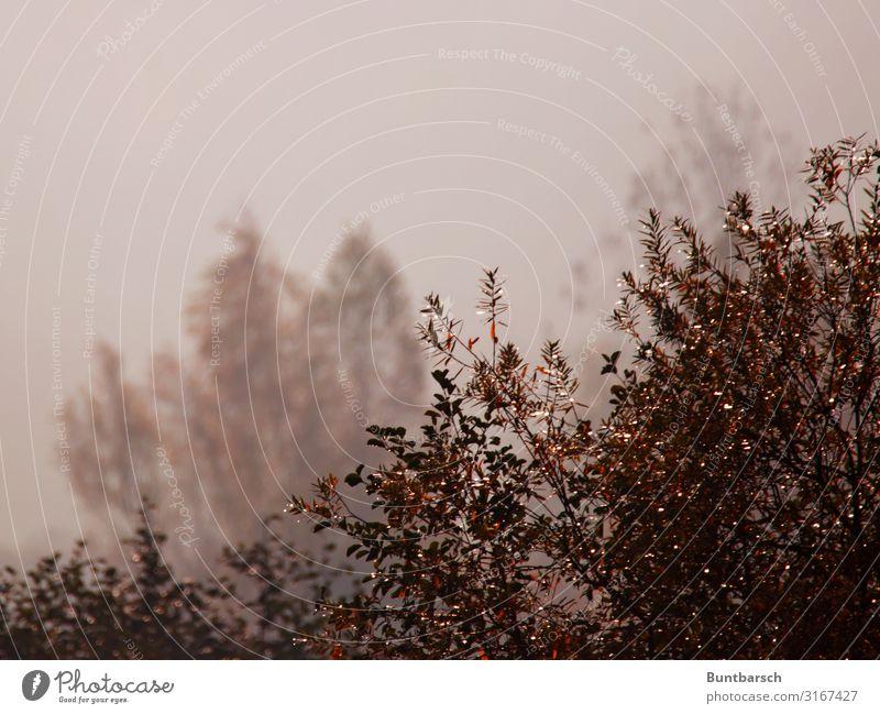 Herbst 3D Umwelt Natur Landschaft Pflanze Urelemente Luft Wasser Wassertropfen Sonnenlicht Wetter Nebel Sträucher Wildpflanze dunkel glänzend natürlich braun