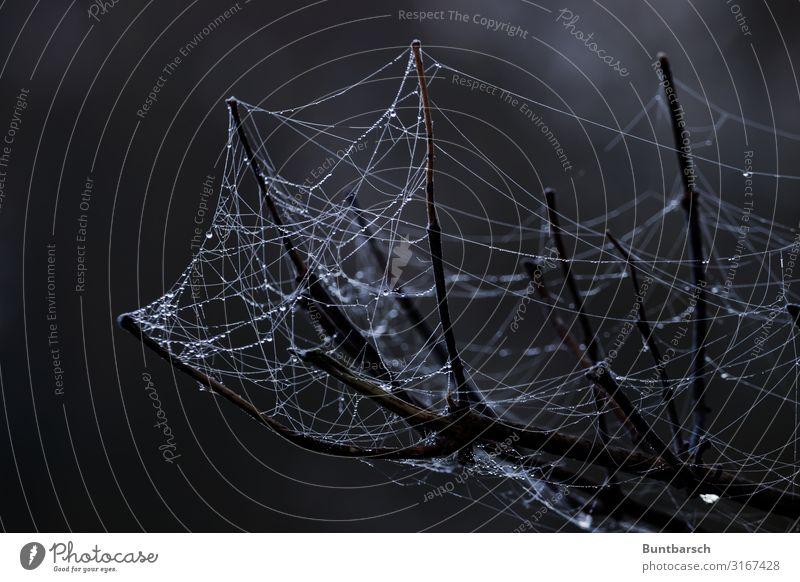 Verzweigtes Netzwerk Umwelt Natur Urelemente Wasser Wassertropfen Herbst Wetter Baum Zweige u. Äste Spinne dunkel nass natürlich Spinnennetz Falle Hinterhalt