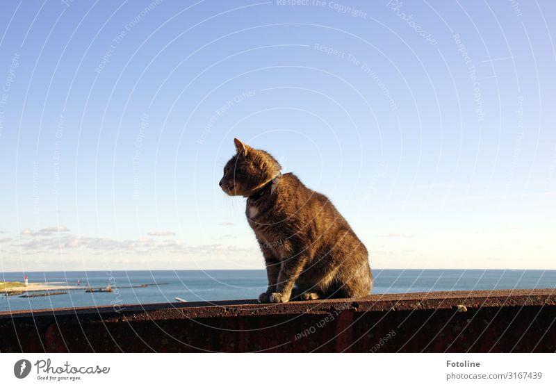 Mauer mit Aussicht Umwelt Natur Landschaft Urelemente Wasser Himmel Wolken Küste Nordsee Meer Insel Tier Haustier Katze Fell 1 hell nah maritim natürlich Wärme