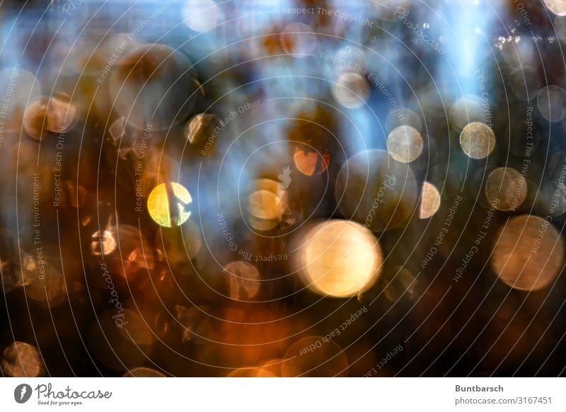 Herbsttau Umwelt Natur Urelemente Wasser Wassertropfen Sonnenaufgang Sonnenuntergang Sonnenlicht glänzend mehrfarbig Tau Kreis Farbfoto Außenaufnahme Experiment