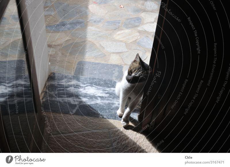 Schwelle Katze blau weiß Erholung Tier schwarz Tierjunges Holz gelb Gefühle Stein braun grau Häusliches Leben Tür Glas