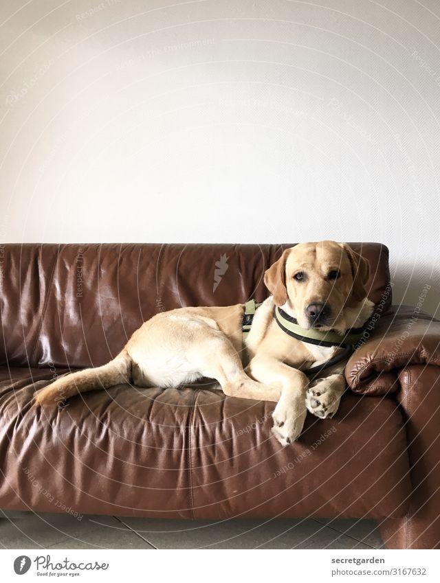 Ich bin ja kein Arzt, aber ich schau's mir mal an. Tier Haustier Hund 1 Erholung Fernsehen schauen warten Neugier braun weiß Zufriedenheit Tierliebe Erwartung