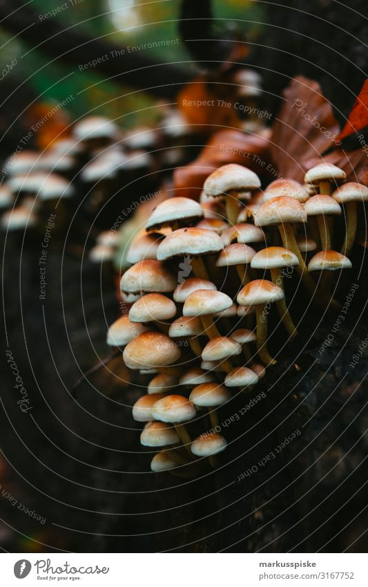 Wildnis Pilze Freizeit & Hobby wandern Garten Umwelt Natur Landschaft Pflanze Tier Herbst Baum Nutzpflanze Wildpflanze Pilzsucher Park Feld Wald Wachstum