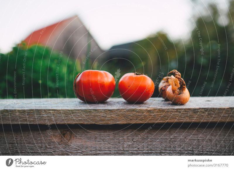 Tomaten und Zwiebeln vom Hochbeet Lebensmittel Gemüse Beet selbstversorgung urban gardening Ernährung Essen Bioprodukte Vegetarische Ernährung Diät Fasten
