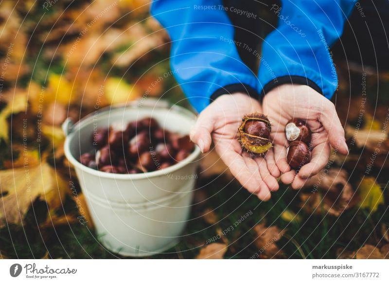 Junge sammelt Kastanien Freude Glück Freizeit & Hobby Erntedankfest Kindererziehung Kindergarten Geschwister Bruder Kindheit Hand Finger 3-8 Jahre Herbst Baum