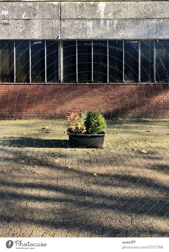 Vorgartenidylle Pflanze Blumenkasten unordentlich ungepflegt Schatten Mauer Beton Maurerkübel Menschenleer Unbewohnt Halle Lagerhalle trist