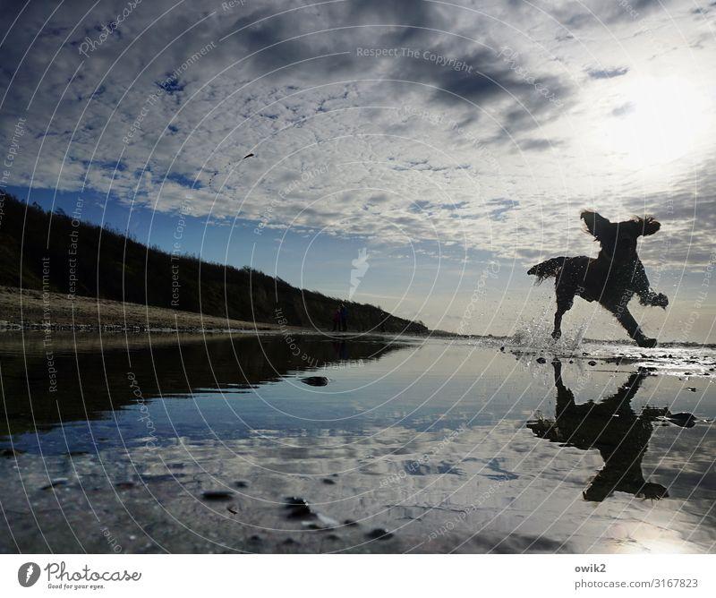 Spieltrieb Umwelt Natur Landschaft Luft Wasser Himmel Wolken Horizont Schönes Wetter Strand Ostsee Hund 1 Tier rennen Spielen Fröhlichkeit Freude Lebensfreude