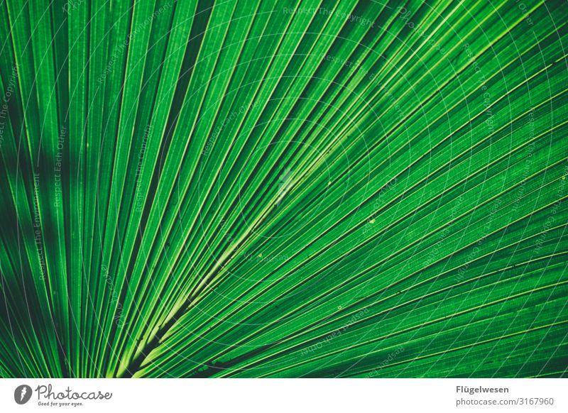 Schattenspiele Blatt Blätter grün hellgrün Pflanze Lichterscheinung Stängel Sonne Vergrößerung Gewächs Palme Palmenblatt Schilf Fächer