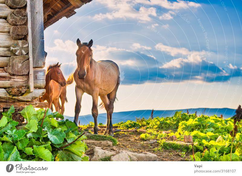 Pferd mit kleinem Fohlen schön Freizeit & Hobby Sommer Sommerurlaub Sonne Haus Natur Landschaft Pflanze Tier Himmel Wolken Sonnenaufgang Sonnenuntergang