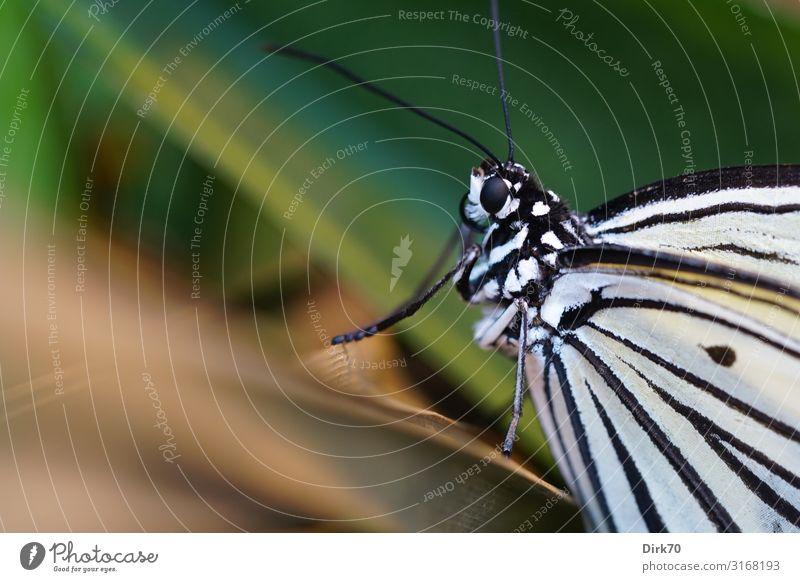 Schmetterlingsporträt Umwelt Natur Tier Pflanze Sträucher Blatt Garten Park Wald Urwald Wildtier Tiergesicht Flügel Insekt Tierporträt 1 sitzen ästhetisch