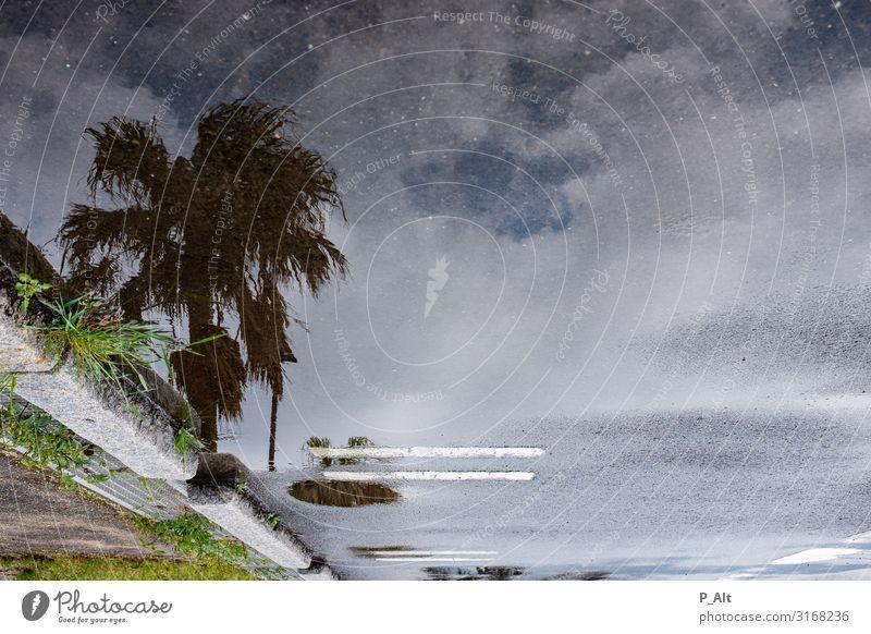 Palmen & Parkplatz Natur Wasser Sommer Regen Baum Grünpflanze Pfütze Spiegelbild Dorf Straße Asphalt Symmetrie ruhig Tourismus Umwelt Wolken Himmel Silhouette