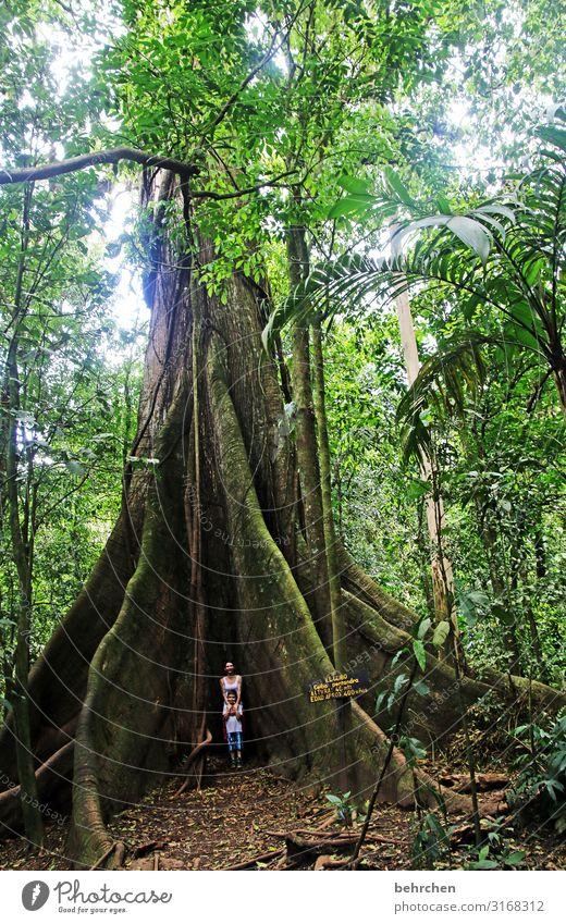 alt | wie ein baum... grün Blätter beeindruckend Licht Urwald Fernweh Landschaft außergewöhnlich fantastisch Costa Rica Natur Ferien & Urlaub & Reisen Tourismus