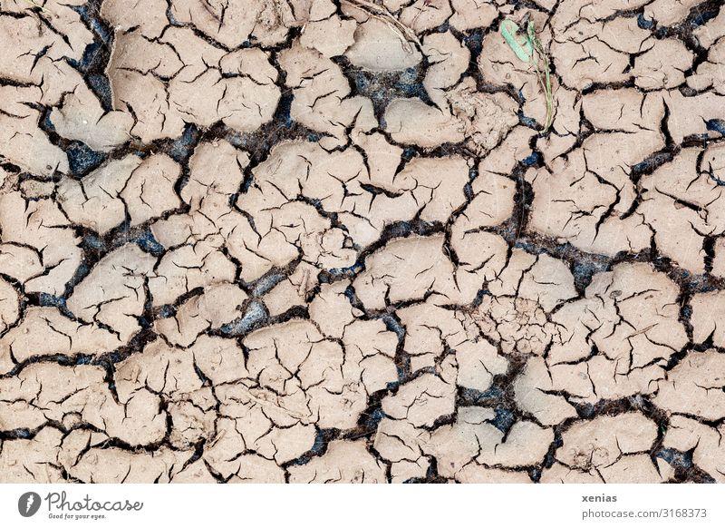 ausgetrockneter Erdboden Dürre Umwelt Klimawandel Natur Landschaft Erde Wüste dehydrieren trocken braun Wassermangel Wärme Regenmangel vertrocknet Riss Farbfoto