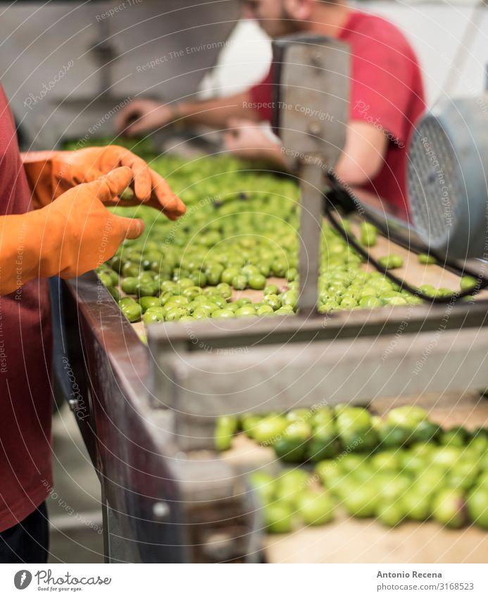 Anonyme Mitarbeiter in der Qualitätskontrolle von Olivenfabriken Frucht Arbeit & Erwerbstätigkeit Beruf Fabrik Industrie Business Mann Erwachsene Partner