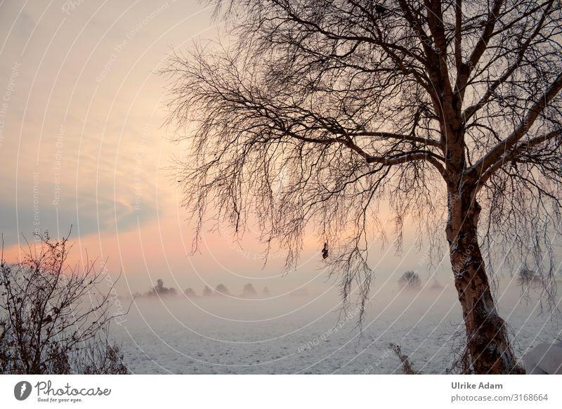 Traumland Teufelsmoor Himmel Ferien & Urlaub & Reisen Natur Weihnachten & Advent Landschaft Baum Einsamkeit Winter natürlich Schnee orange Stimmung Eis träumen