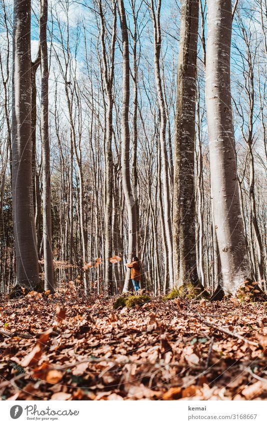 Frau umarmt  Baum im Wald Leben harmonisch Wohlgefühl Zufriedenheit Sinnesorgane Erholung ruhig Meditation Freizeit & Hobby Freiheit Mensch feminin Erwachsene 1