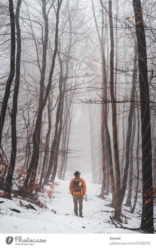 Mann mit Hut und Rucksack im Wald im Winter, Rückansicht Lifestyle harmonisch Wohlgefühl Zufriedenheit Sinnesorgane Erholung ruhig Freizeit & Hobby Ausflug