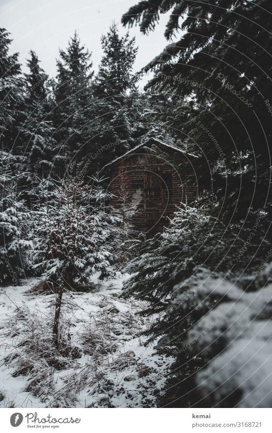 Winterlich harmonisch Wohlgefühl Zufriedenheit Erholung ruhig Freizeit & Hobby Ausflug Abenteuer Freiheit Natur Landschaft Pflanze Himmel Wetter Eis Frost