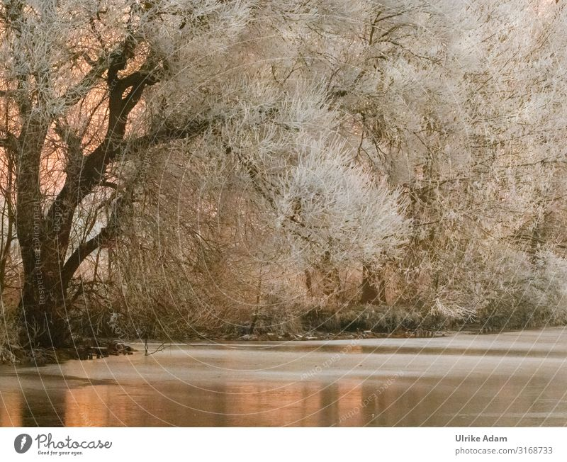 Wintertraum Schnee Tapete Postkarte Trauerkarte Feste & Feiern Weihnachten & Advent Trauerfeier Beerdigung Natur Pflanze Eis Frost Baum Flussufer