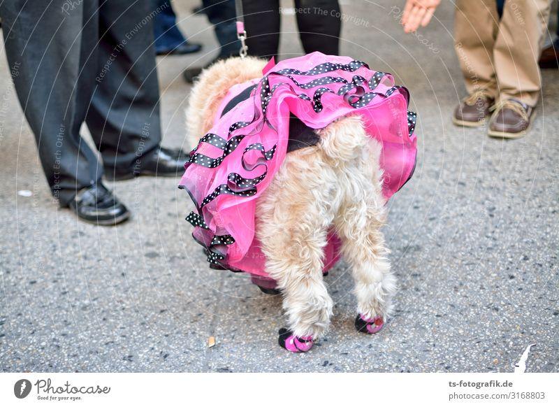 Pet-Ticoat Rock Fell Unterrock Rüschenkleid Tier Haustier Hund 1 Kitsch Krimskrams stehen außergewöhnlich exotisch Fröhlichkeit einzigartig lustig verrückt