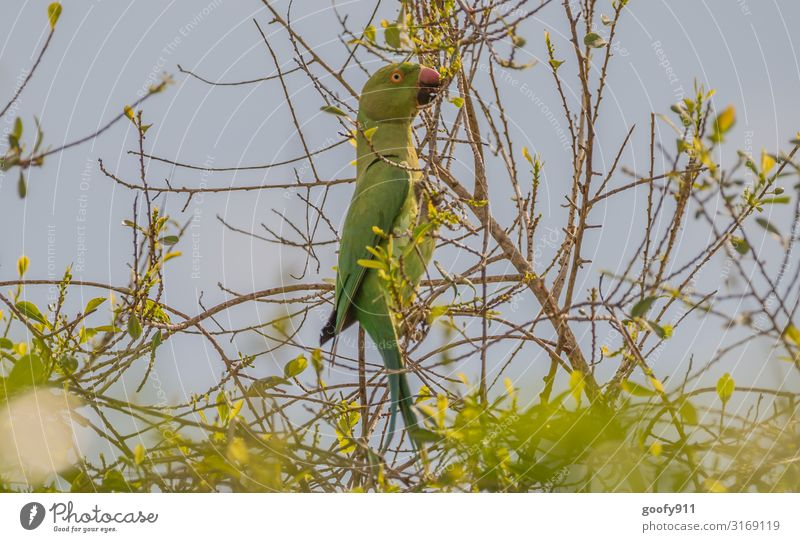 Papagai Ausflug Abenteuer Freiheit Safari Expedition Umwelt Himmel Baum Sträucher Urwald Tier Wildtier Vogel Tiergesicht Flügel Papageienvogel 1 beobachten