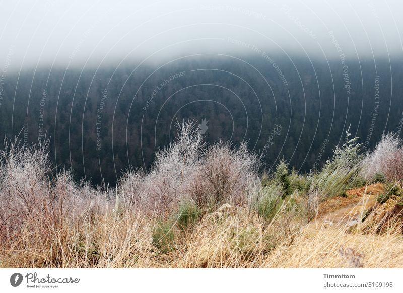 Kalte Schwarzwaldhöhen Ferien & Urlaub & Reisen Umwelt Natur Landschaft Pflanze Wolken Winter Wetter Nebel Eis Frost Wald Hügel kalt natürlich blau braun grün