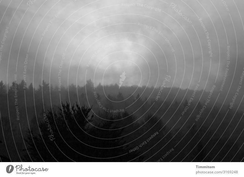 Morgenstund Umwelt Natur Landschaft Himmel Wolken Wetter schlechtes Wetter Nebel Baum Wald Hügel Heidelberg dunkel grau schwarz weiß Schwarzweißfoto